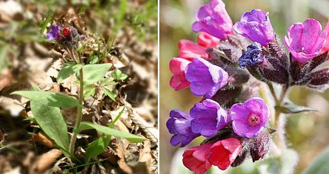 Site internet de gilbert jaccon fleurier num rique for Plante 21 en ligne
